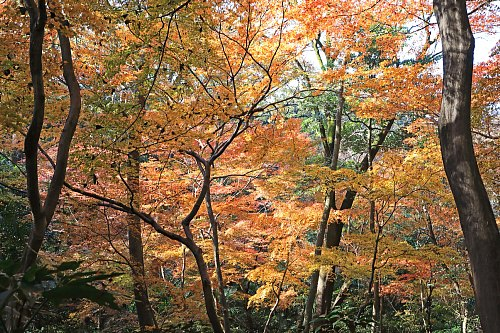 Shirokanedai1910_x500.jpg