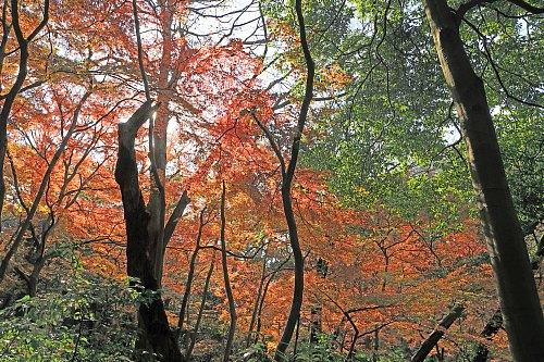 Shirokanedai1912_x500.jpg