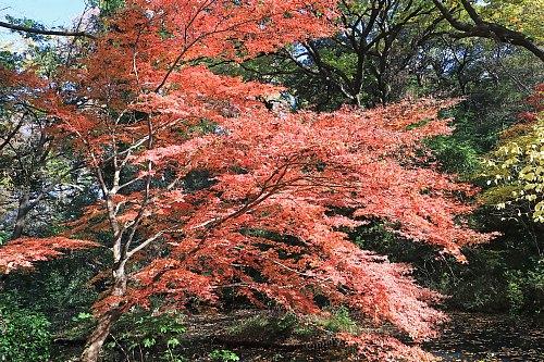 Shirokanedai1922_x500.jpg