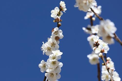 spring2007_x500.jpg