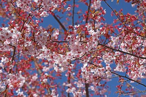 spring2012_x500.jpg