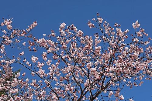 spring2018_x500.jpg