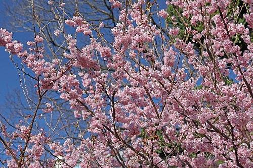 spring2023_x500.jpg